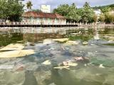 Plastic waste in the Duong Dong River on Phu Quoc Island